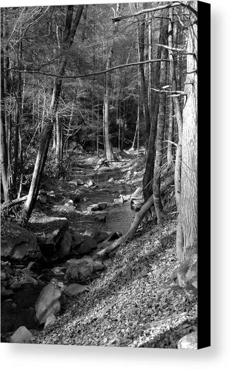 Nature Canvas Print featuring the photograph Wesser Creek Trail by Kathy Schumann