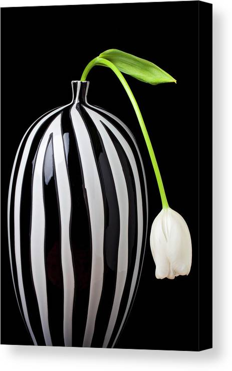 White Canvas Print featuring the photograph White Tulip In Striped Vase by Garry Gay