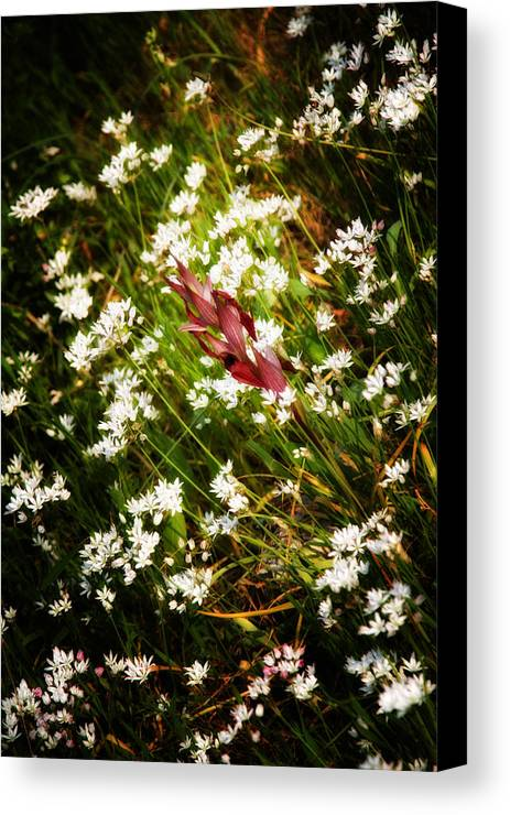 Agriculture Canvas Print featuring the photograph Wild Flowers by Stelios Kleanthous