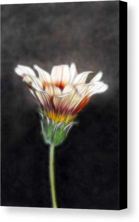 Wild Flowers Canvas Print featuring the photograph Wild Petal Dreams by Lesley Smitheringale