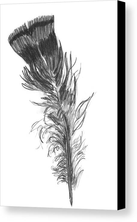 Wild Turkey Canvas Print featuring the drawing Wild Turkey Feather by Kevin Callahan
