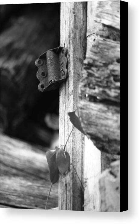 Ansel Adams Canvas Print featuring the photograph Winslow Cabin Door Detail by Curtis J Neeley Jr