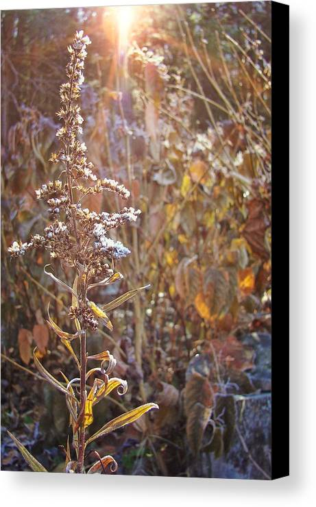 Winter Canvas Print featuring the photograph Winter Sun Texture by JAMART Photography