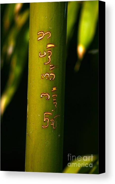 Bamboo Canvas Print featuring the photograph Written Bamboo 01 by April Holgate