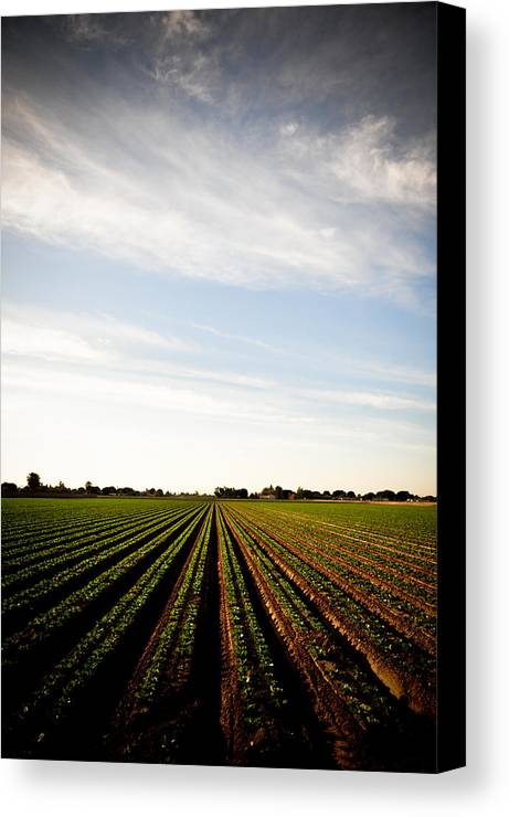 Lettuce Canvas Print featuring the photograph Yuma Fields by Scott Sawyer