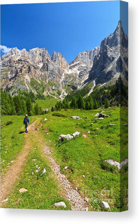 Hiker Canvas Print featuring the photograph Hiking In Contrin Valley by Antonio Scarpi