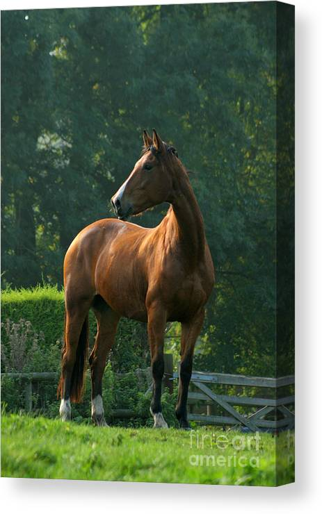 Horse Canvas Print featuring the photograph Sentinel by Angel Ciesniarska