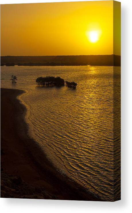 Sun Canvas Print featuring the photograph Sunrise And Mangrove Trees by Jess Kraft