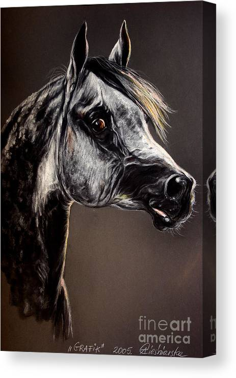 Horse Canvas Print featuring the drawing The Arabian Horse by Angel Ciesniarska