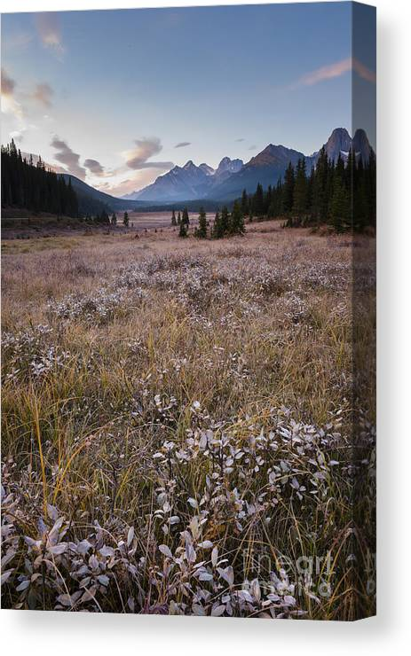 Kananaskis Canvas Print featuring the photograph Engadine Meadow by Ginevre Smith