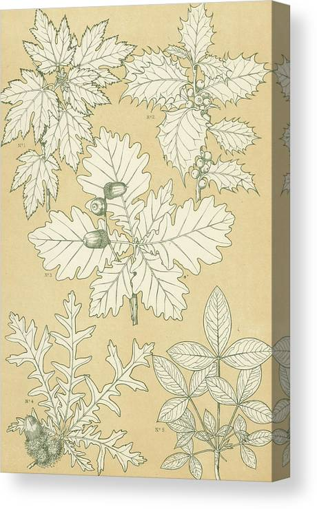 Ornament; Ornamentation; Design; Pattern; Historical; Plates; Leaves; Nature; Botany; Botanical; Leaf; Natural Canvas Print featuring the painting Leaves From Nature by English School