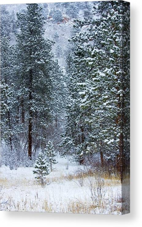 Blizzard Canvas Print featuring the photograph Winter In Pike National Forest by Steve Krull