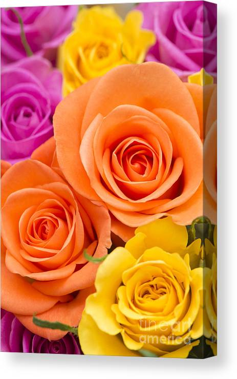 Arranged Canvas Print featuring the photograph A Riot Of Roses by Anne Gilbert