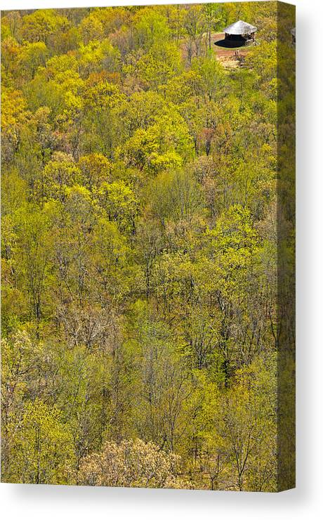 Trees Canvas Print featuring the photograph Among The Trees by Karol Livote