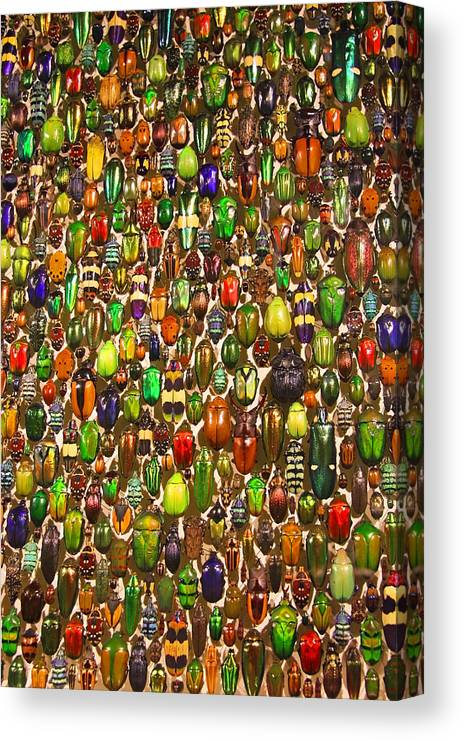 Beetles Photo Canvas Print featuring the photograph Army Of Beetles And Bugs by Brooke T Ryan