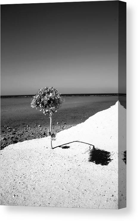 Egypt Canvas Print featuring the photograph Benditity by Jez C Self