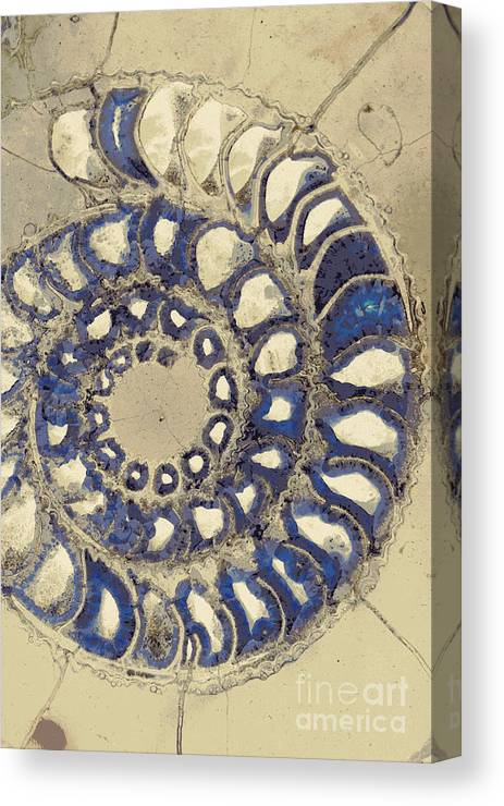 Curl Canvas Print featuring the photograph Blue Ammonite by Joe Jake Pratt