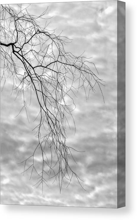 Fine Tree Branches Canvas Print featuring the photograph Branches And Clouds by Robert Ullmann