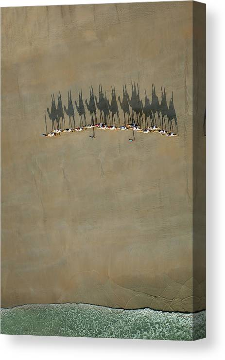 Ride Canvas Print featuring the photograph Broome Camel Train by Renee Doyle