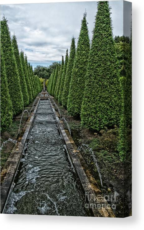Conifer Water Feature Canvas Print featuring the photograph Conifer Lined Water Feature by Brothers Beerens