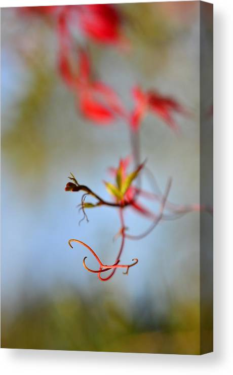 Autumn Canvas Print featuring the photograph Creeper / Autumn by Gynt