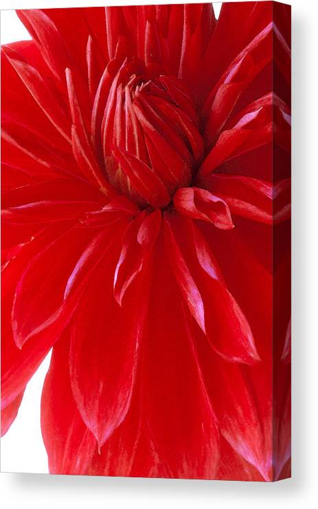 Red Canvas Print featuring the photograph Dahlia I by Michael Moschogianis