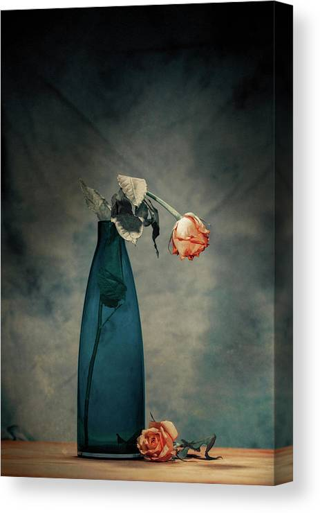 Rose Canvas Print featuring the photograph Decay - Dying Rose by Howard Ashton-jones