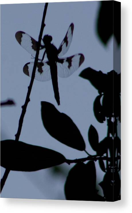 Blue Canvas Print featuring the photograph Dragonfly Blue by Sarah Boyd