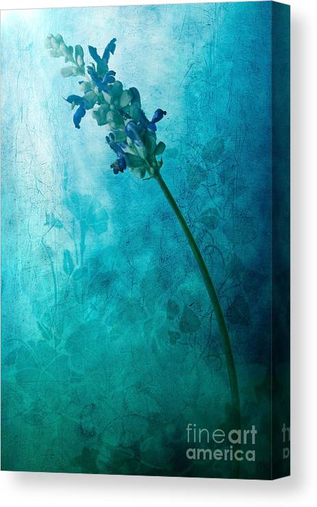 Flower Painting Canvas Print featuring the digital art Fae by John Edwards