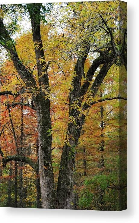 Fall Canvas Print featuring the photograph Fall In Kentucky by Matt McClintock