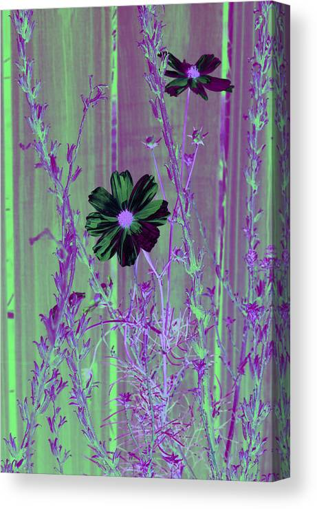 Purple Canvas Print featuring the photograph Final Fall Flower 4 by Sheri Bartoszek