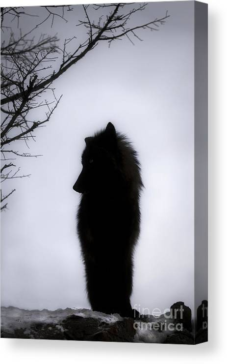Wolf Canvas Print featuring the photograph Wolf Folklore by Wildlife Fine Art