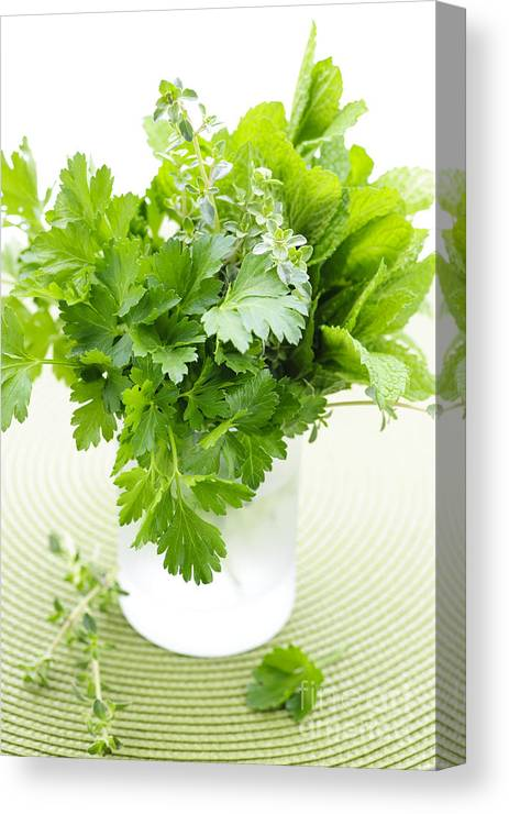 Herbs Canvas Print featuring the photograph Fresh Herbs In A Glass by Elena Elisseeva