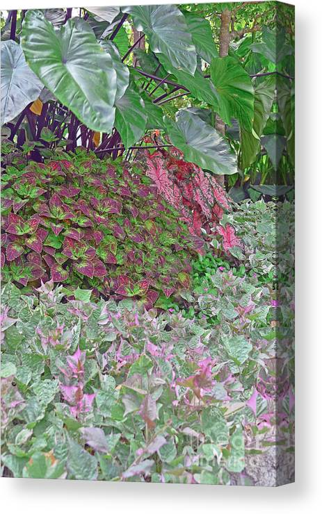 Landscape Canvas Print featuring the photograph Geometric Shapes Of Nature by Elvis Vaughn