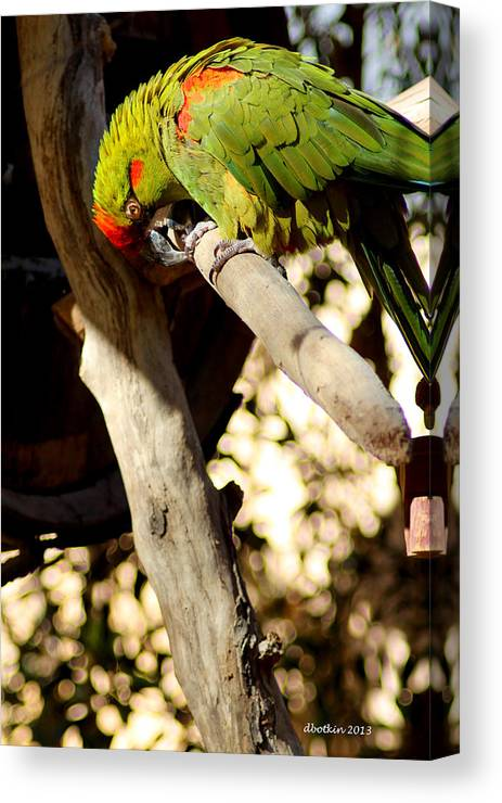 Zoo Canvas Print featuring the photograph Gotta Sharpen The Beak by Dick Botkin