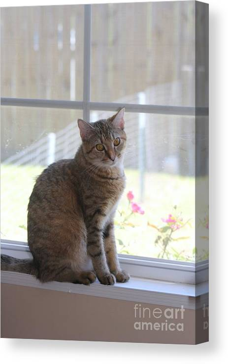 Cat Canvas Print featuring the photograph Gretchen Sitting In The Window by Michelle Powell