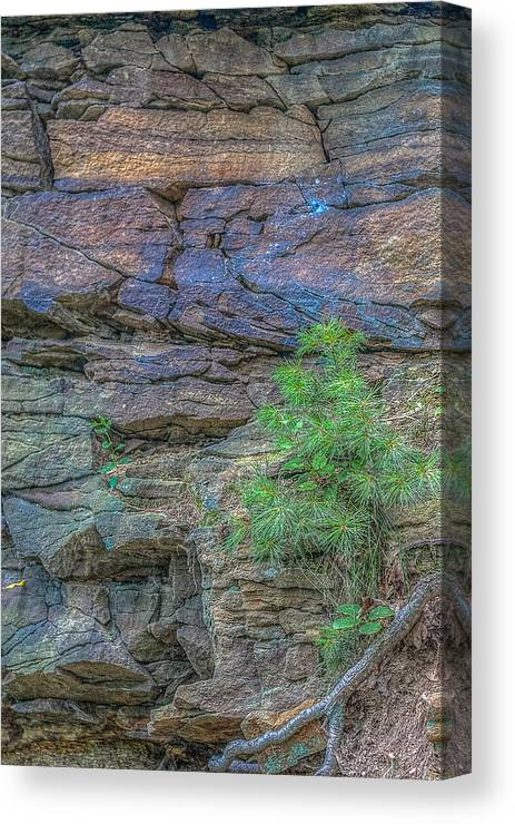 Tree Canvas Print featuring the digital art Hanging On Barely by Randy Steele