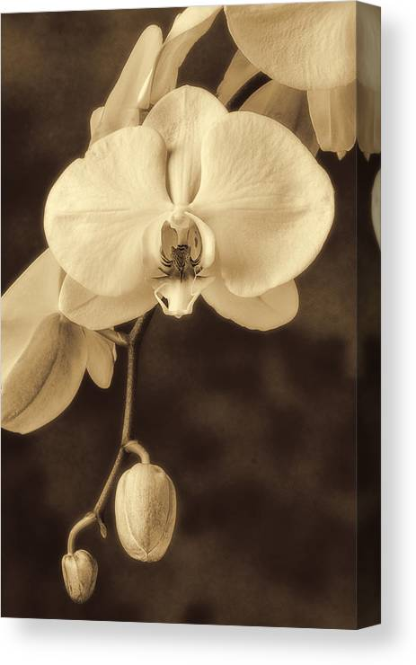 Hanging White Orchids Canvas Print featuring the photograph Hanging Orchid by Garry Gay