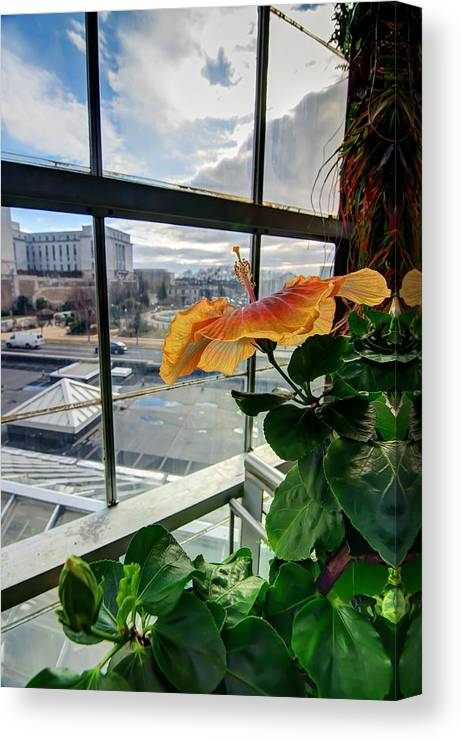 Hdr - Flowers Canvas Print featuring the photograph Hdr - Flowers And Dc by Dem Wolfe