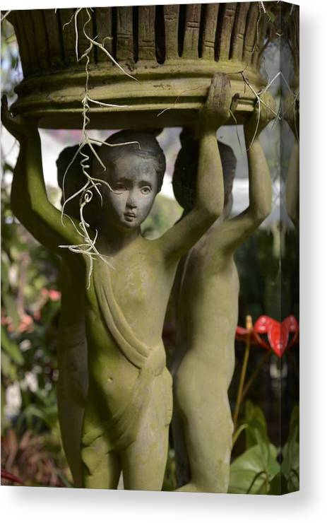 Garden Canvas Print featuring the photograph Lifting Up by William Hallett