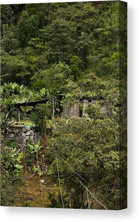Rainforest Canvas Print featuring the photograph Living With Nature by Nadya Primak