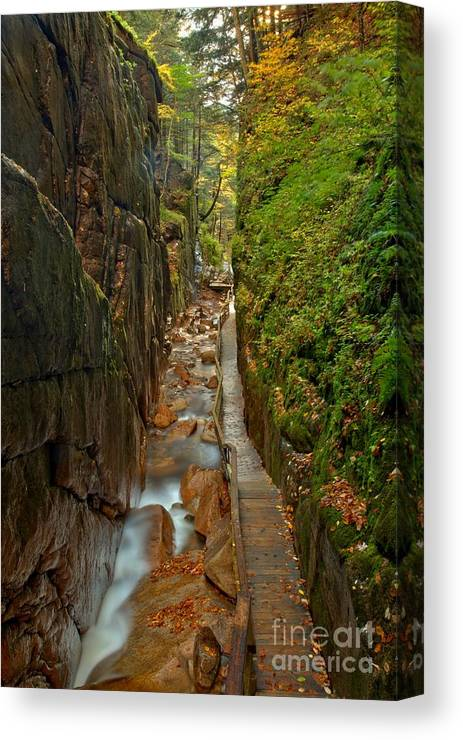 Flume Gorge Canvas Print featuring the photograph Looking Down Flume Gorge by Adam Jewell