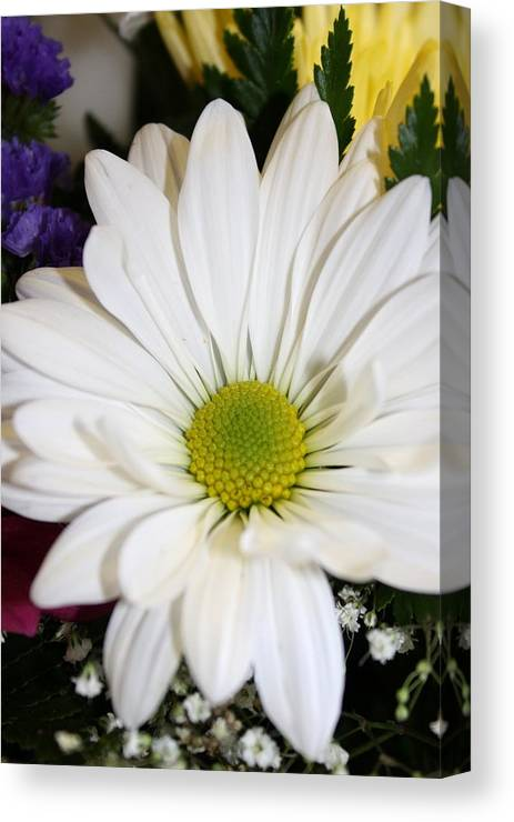 Daisy Canvas Print featuring the photograph Macro Detail by Sue Chisholm