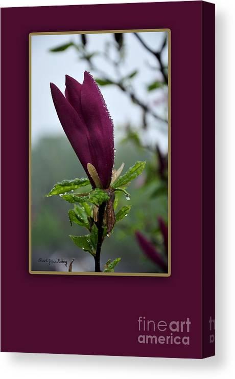 Greeting Canvas Print featuring the photograph Magnolia Greeting by Randi Grace Nilsberg
