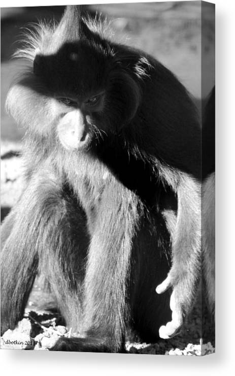 Zoo Canvas Print featuring the photograph Monkey See Monkey Do by Dick Botkin