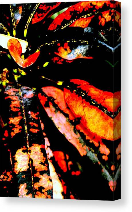 Plant Canvas Print featuring the photograph Nature's Gift by Antonia Citrino