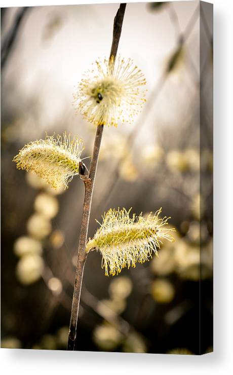 Landscape Canvas Print featuring the photograph New Beginnings by Brenna Schelle