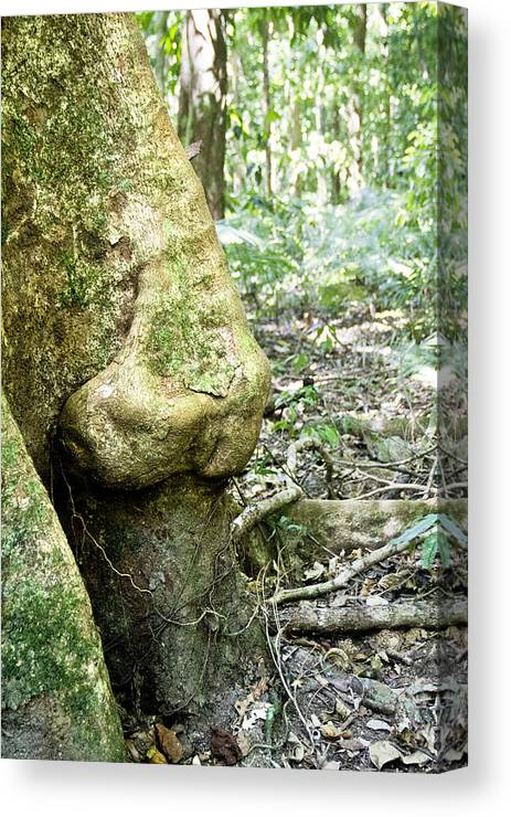 Nose Tree Canvas Print featuring the photograph Nose Tree In Gwandanaland by Debbie Cundy