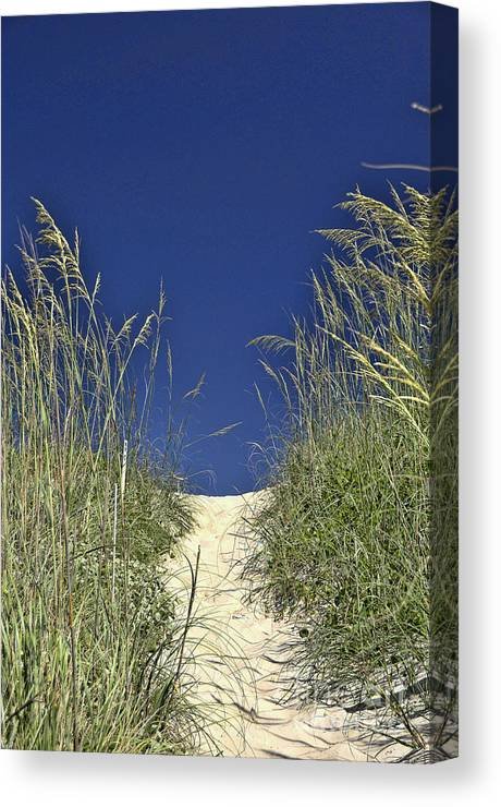 Path Through The Dunes Canvas Print featuring the photograph Path Through The Dunes by Allen Beatty