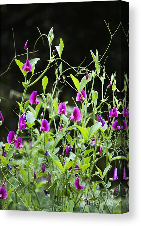 Flowers Canvas Print featuring the photograph Pink Flowers by Fabian Roessler